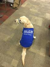 Class of 2017's service dog, Takia!